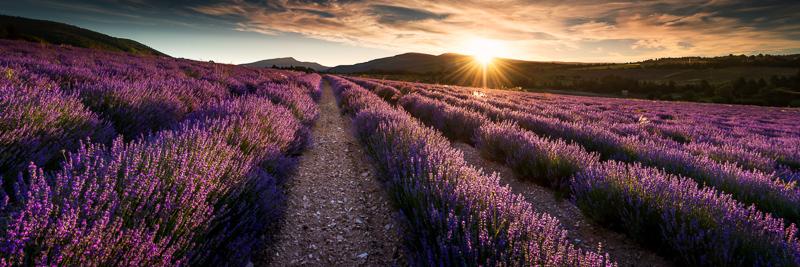 Therapieraum Lavendel Provence